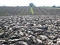 Obliterated footpath near Woodham - geograph.org.uk - 389848.jpg