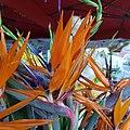 Oiseau de paradis sur un stand de fleuriste.jpg