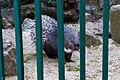 Old World Porcupine (5748889468).jpg