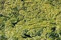 Orsay Parc East Cambridgeshire 2012 06.jpg
