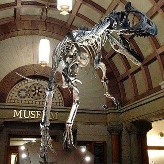 University, Hayes and Orton Halls - Cryolophosaurus ellioti replica in Orton Hall lobby