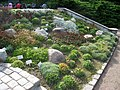 Oslo Botanical Garden - IMG 8926.jpg