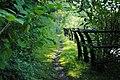Overgrown embankment - panoramio.jpg