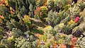Overhead shot of Penobscot Experimental Forest.jpg