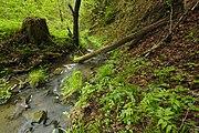 Přírodní rezervace Kavinský potok (04).jpg