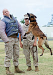 PMO K-9 unit conducts bite training 150415-M-TH981-001.jpg