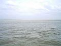Padma river.jpg
