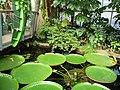 Paignton , Paignton Zoo, Crocodile Swamp - geograph.org.uk - 1484602.jpg