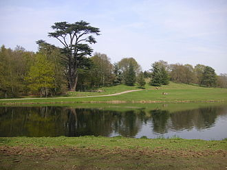 Painshill - The Great Cedar is thought to be the largest in Europe.