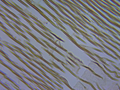 Paired nanoparticle chains in Ferrocell.png