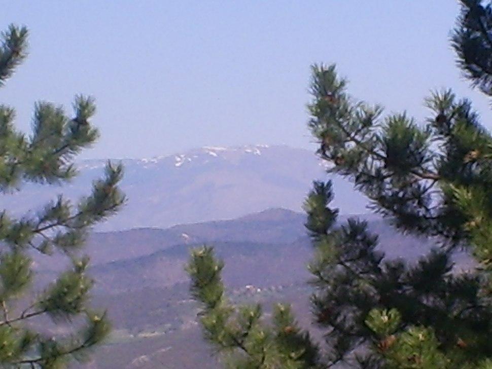 Pancicev vrh