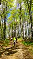 Park Krajobrazowy Gór Słonnych.jpg