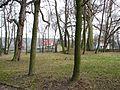Park pałacowy Wiśniowa 2013 10.JPG