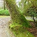 Parque Terra Nostra, Furnas, S. Miguel, Açores,Portugal - panoramio (17).jpg