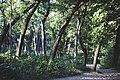 Path among leafy trees (Unsplash).jpg