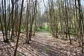 Path through Puckden wood - geograph.org.uk - 1261657.jpg
