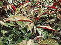 Penang Botanic Gardens (32).JPG