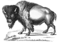 Pennant Thomas Hist of Quadrupeds 1793-Bison.png