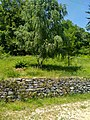 Percorso interno Parco del Monte Barro.jpg