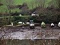 Percuil River at low tide. - geograph.org.uk - 372642.jpg