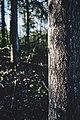 PermaLiv løvskog 23-04-20.jpg