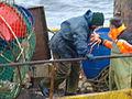 Pesca de centolla en la Bahía Ushuaia 39.JPG