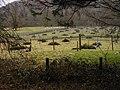 Pheasant Pens - geograph.org.uk - 359982.jpg