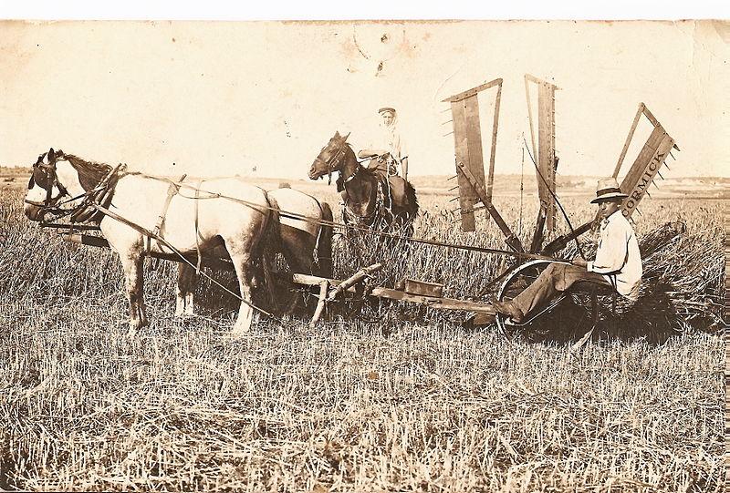 גבעת עדה עבודה על המקצרה בשדות המושבה