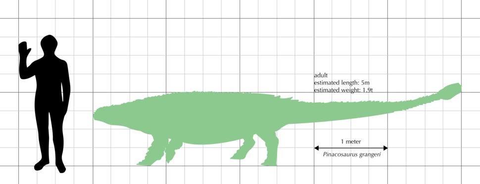 Pinacosaurus grangeri size comparison