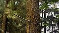 Pine Treebark.jpg