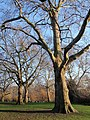 Planes, St James's Park - geograph.org.uk - 1705508.jpg