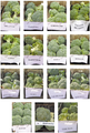 Plant broccoli samples.PNG