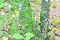 Plant on Tree.jpg