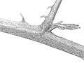 Plant stem scheme kz p.png