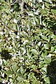 Plants (7).jpg