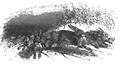 Podróże Gulliwera tom I page0201.png
