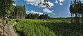 Pohled na smrkovou monokulturu z posedu, Protivanov, okres Prostějov.jpg