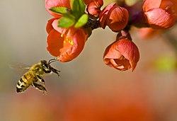 Bienensterben