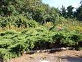 Poltava Botanical garden (01).jpg