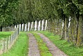 Poplar-lined driveway, Strangford - geograph.org.uk - 963371.jpg