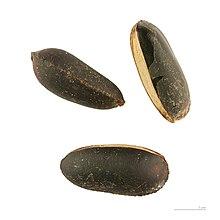 Pouteria caimito - Wikipedia, la enciclopedia libre