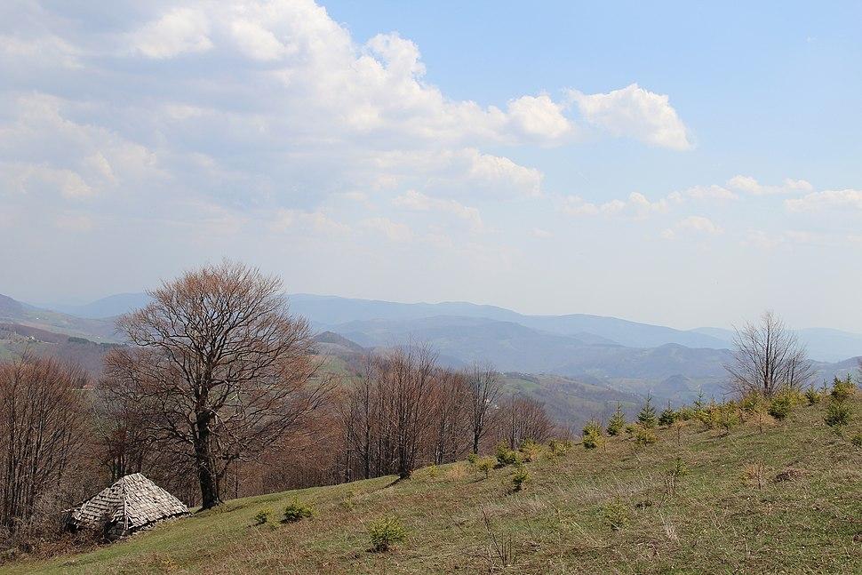 Povlen - zapadna Srbija - severni obronci Malog Povlena - mesto Bele vode detalj 13