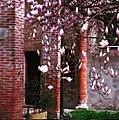 Primavera a palazzo.jpg