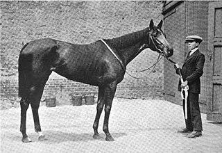 Princess Dorrie British-bred Thoroughbred racehorse