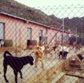 Protectora de animales.png