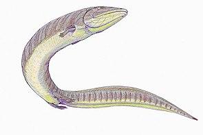 Pteroplax