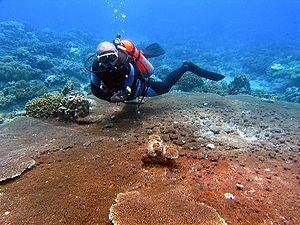 Carmen, Agusan del Norte - Punta Diwata Reef
