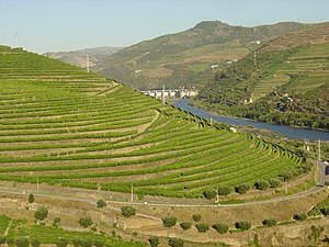 Peso da Régua - The terraced lands along the Douro River, with vineyards growing: the municipality was recognized as the International City of Vineyards and Wine in 1988