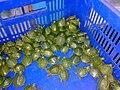 RES Turtles.jpg