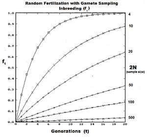 Quantitative genetics - Inbreeding resulting from Genetic drift in Random fertilization .